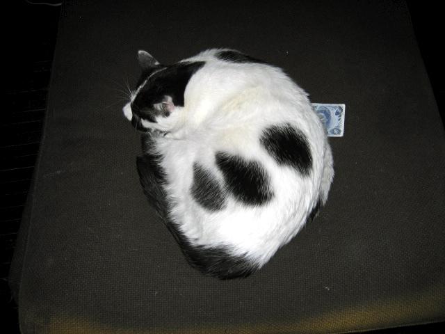Otto takes the Money